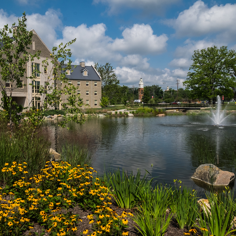 Colorful flowers and grasses surround the stormwater management pond on Western campus