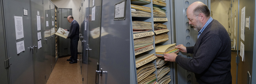 herbarium-stacks