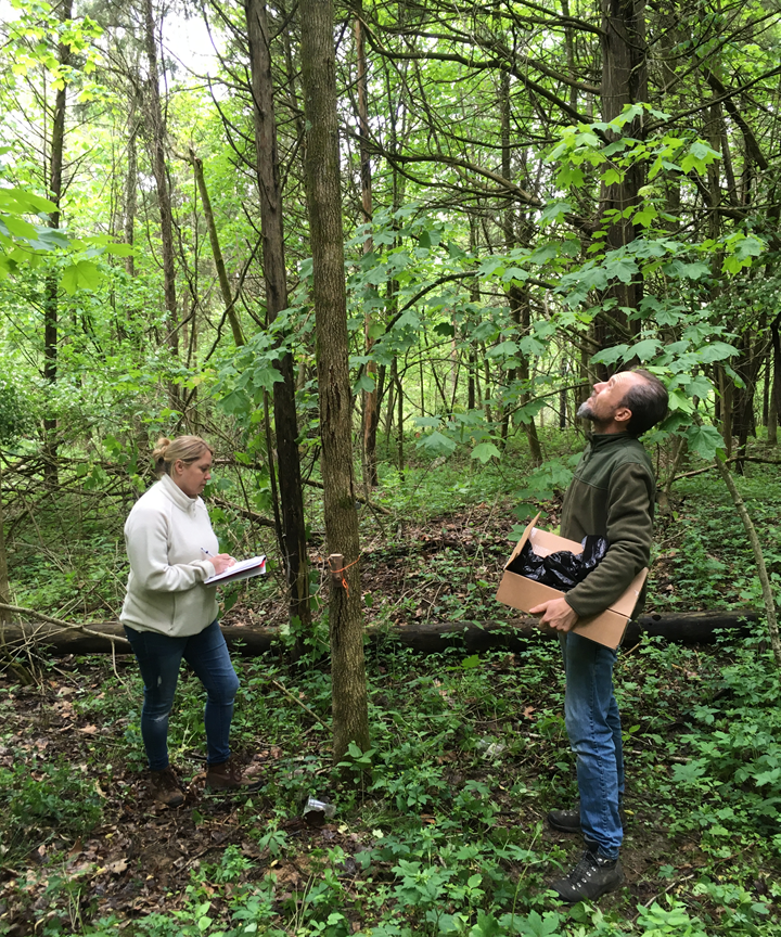 Alisha Singleton and Steve Sullivan are assessing an ash tree and writing information
