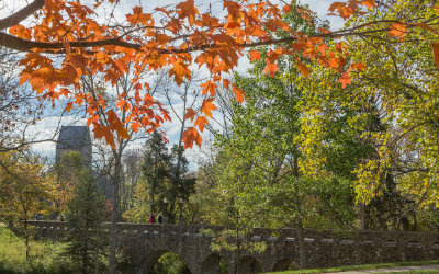 Autumn scene on Western Campus with colorful tree with orange leaves in foreground, and a stone bridge in background