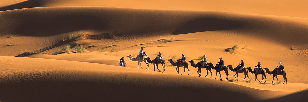 Sahara Camel Train