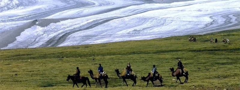 Nomads ride alpacas in Mongolia