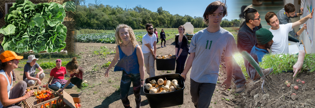 photo collage of students working at the Institute for Food's farm