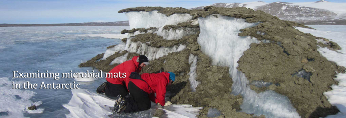 Examining microbial mats in the Antarctic