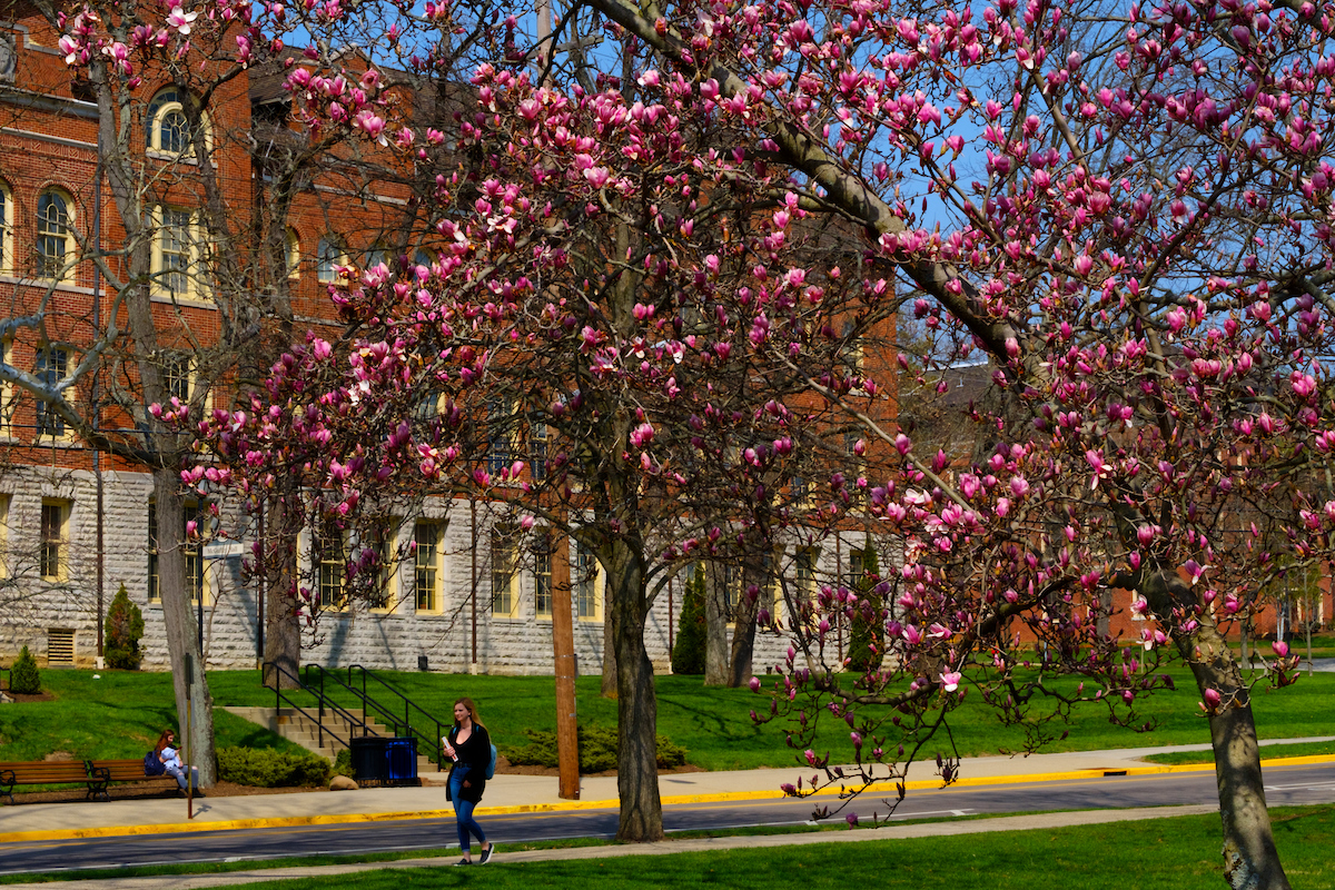 McGuffey Hall in the spring