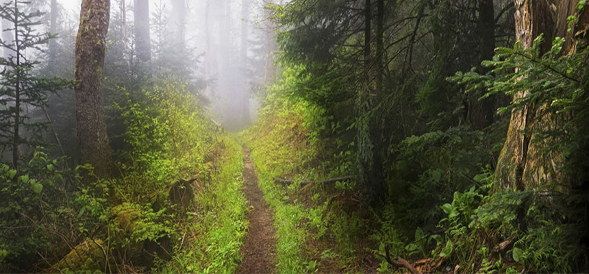 A foggy trail out in a forrest